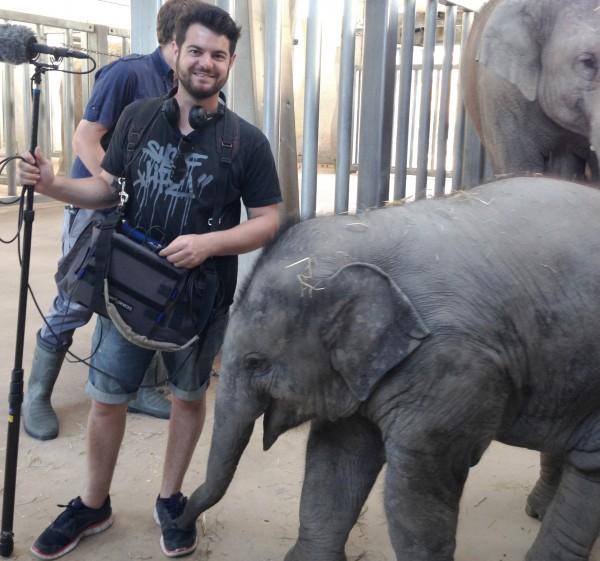 Kalaya, Baby Elephant